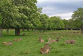 bushy-park-london