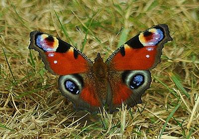 butterfly 2 - Seasonal Gardening Tips
