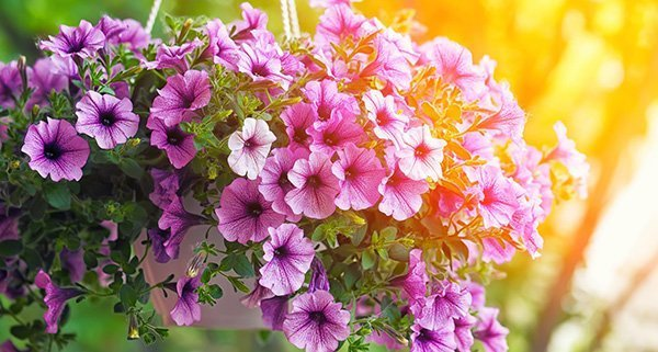 Seasonal Gardening Tips