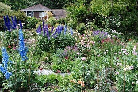 Ashcombe 450 - The National Garden Scheme - Find An Open Garden In Surrey