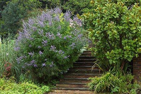 Coldharbour House 450 - The National Garden Scheme - Find An Open Garden In Surrey