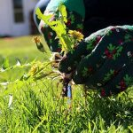 Seasonal Gardening Tips